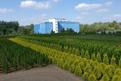 Grupa Kapias produkcja w gruncie