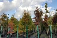 Grupa Kapias Punkt sprzedaży hurtowej w barwach jesieni