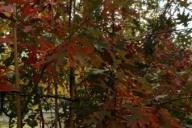 Grupa Kapias Punk sprzedaży hurtowej w barwach jesieni