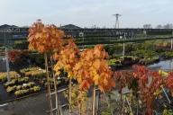 Grupa Kapias barwy jesieni 2018