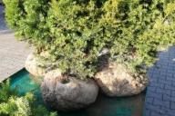 Grupa Kapias materiał kopany w balocie