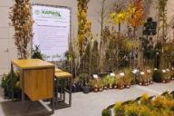 Grupa Kapias - giełda szkółkarska Silesia Plants 2019