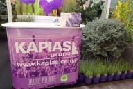 Grupa Kapias - 25. Międzynarodowa Wystawa Zieleń to Życie, Warszawa 2017