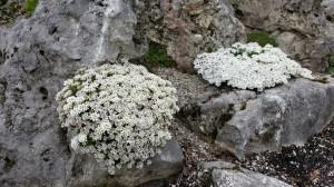 Grupa Kapias bylina