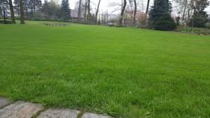 Grupa Kapias pielegnacja trawnika